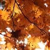 紅葉の日本