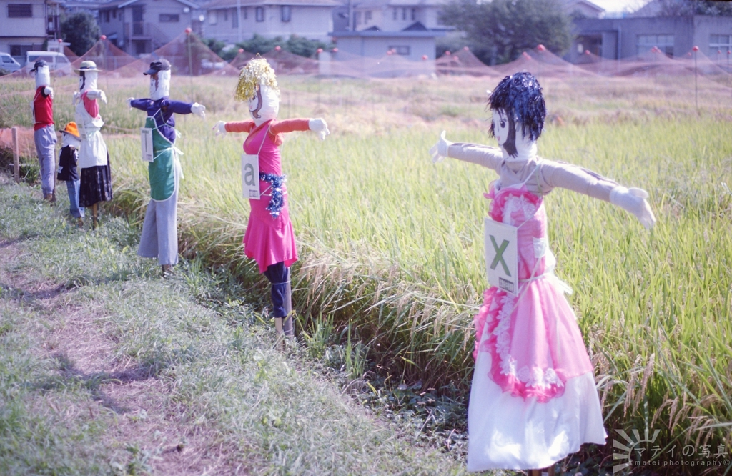 bodyguards of the rice field