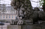 獅子の威をかる番鳥