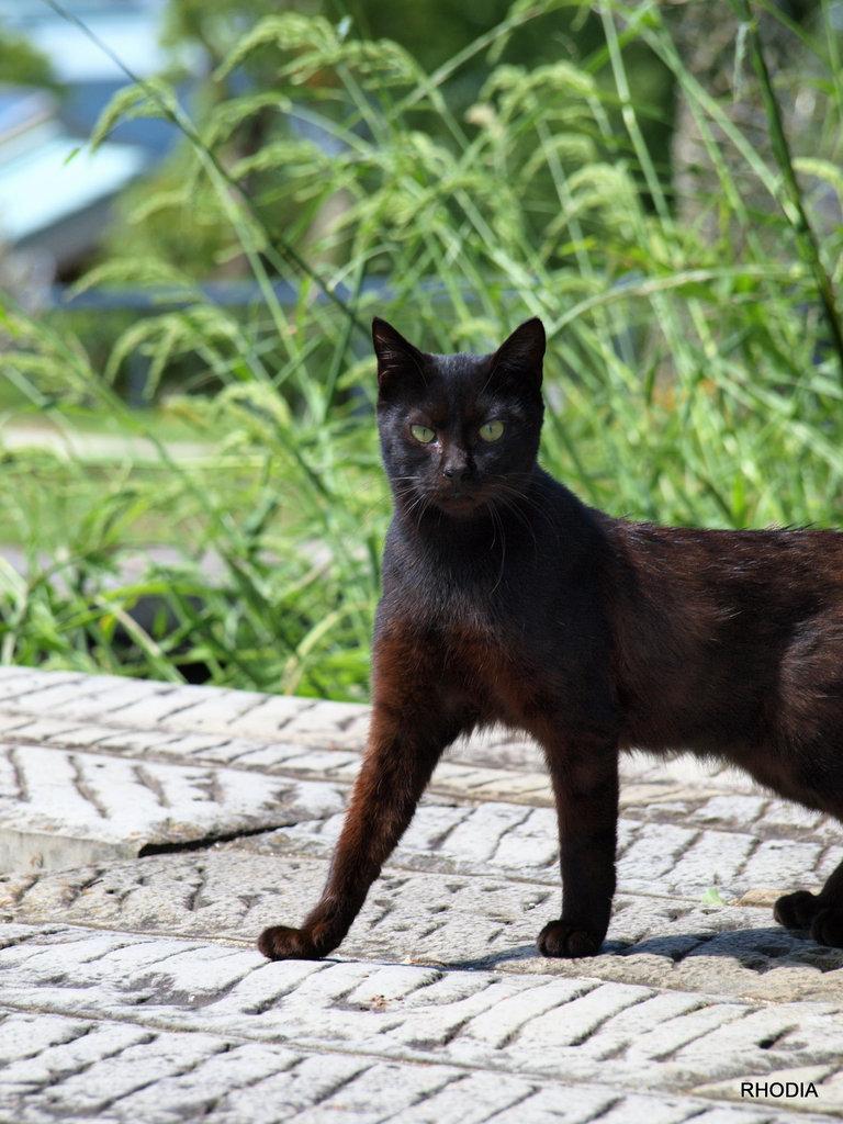 Glover's Cat.