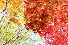 秋の葉はカラフル♪