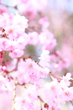 花の醍醐寺 其の伍
