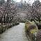 辻村植物公園