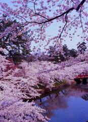 弘前公園 桜景色