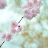 ピンク/ブルーのCONTRAST
