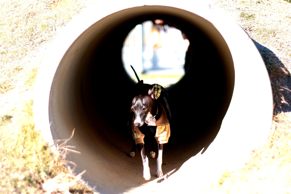 トンネルを潜ると