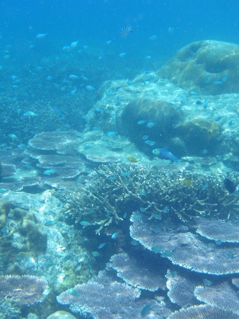 サンゴ礁と魚たち