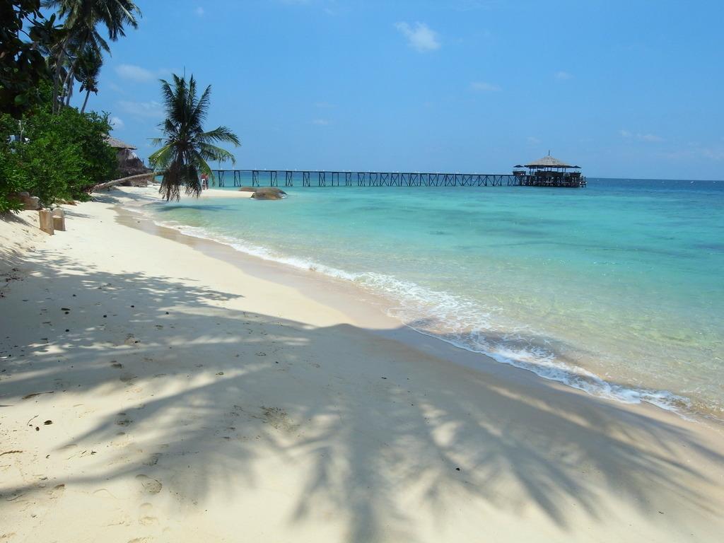桟橋レストランと椰子の影