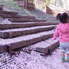 櫻雪/サクラ散ル。