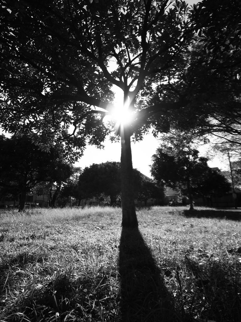 光と影 木