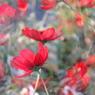 CANON Canon EOS 40Dで撮影した植物(プリズム)の写真(画像)