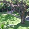 ロイヤルハワイアンの中庭