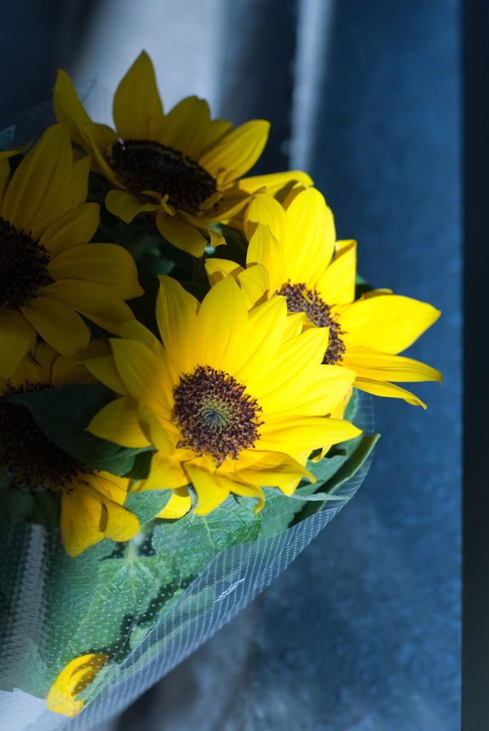 sun flower_2