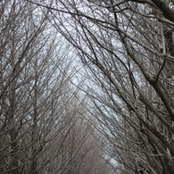 NIKON NIKON D60で撮影した風景(並木)の写真(画像)
