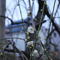 NIKON NIKON D60で撮影した植物(春の兆し)の写真(画像)