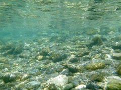 鮎追いし夏の川