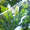 グリーンスロープ