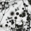 BORDER 〜 冬から春へ
