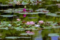 夏の池 2