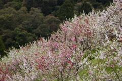 花の斜面 2