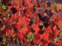 秋の朝の色1