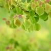 緑の季節1