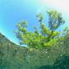サラバ夏空夏の川