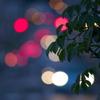 ムベの木の休日の夕刻