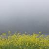 霧の四万十川