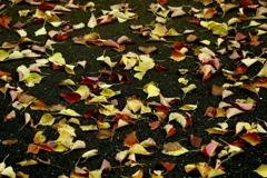 秋のリズム