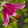 花の表情9