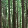 木のリズム