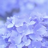 梅雨ブルー