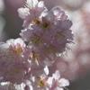 桜と光と時と