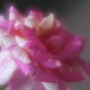 花の表情7