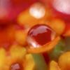 雨のちオレンジ色