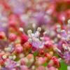 雨の日のお花畑