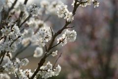 花のリレー 2