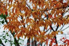 深まる秋の色2