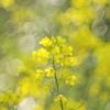 黄色の印象
