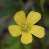 小さな花の声4