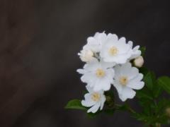 MAY WHITE 4
