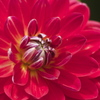 花の表情3