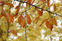 秋の曇り日