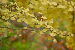 深まる秋の色3