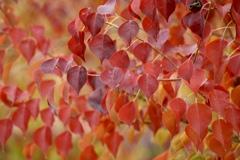 深まる秋の色1