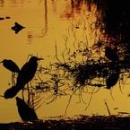 SIGMA SIGMA SD1 Merrillで撮影した(夕刻の思い)の写真(画像)