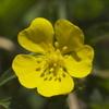 野の花 2
