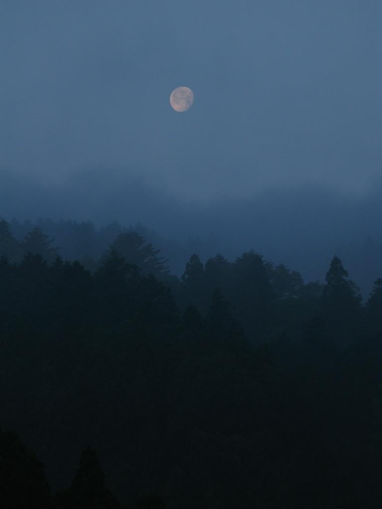 朝霧の向こう