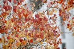 深まる秋の色4